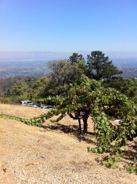 Gorgeous Day on Monte Bello Ridge with panoramic view of the entire Bay Area