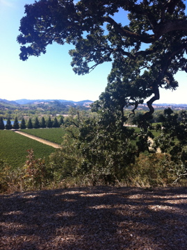 View of the Russian River Valley from Copain Winery
