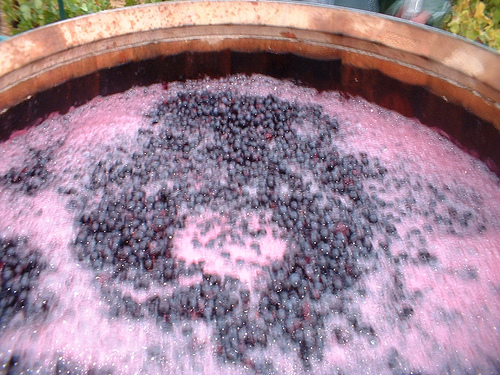Red wine fermenting in barrel