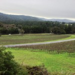 View of Anderson Valley from Roederer Estate