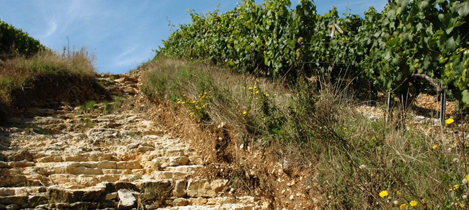 A unique territory and terroir - Image courtesy of Pure Chablis