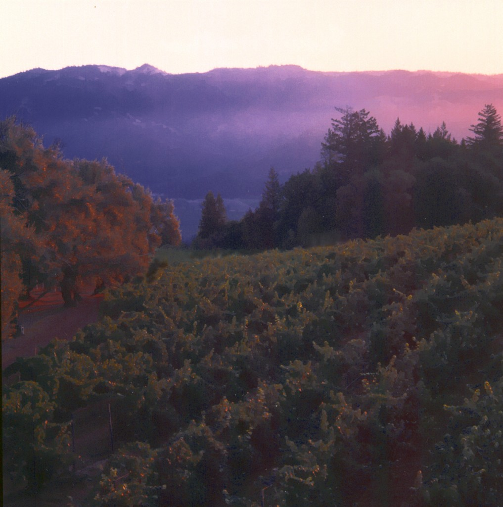 Smith Madrone Vineyards at Twilight
