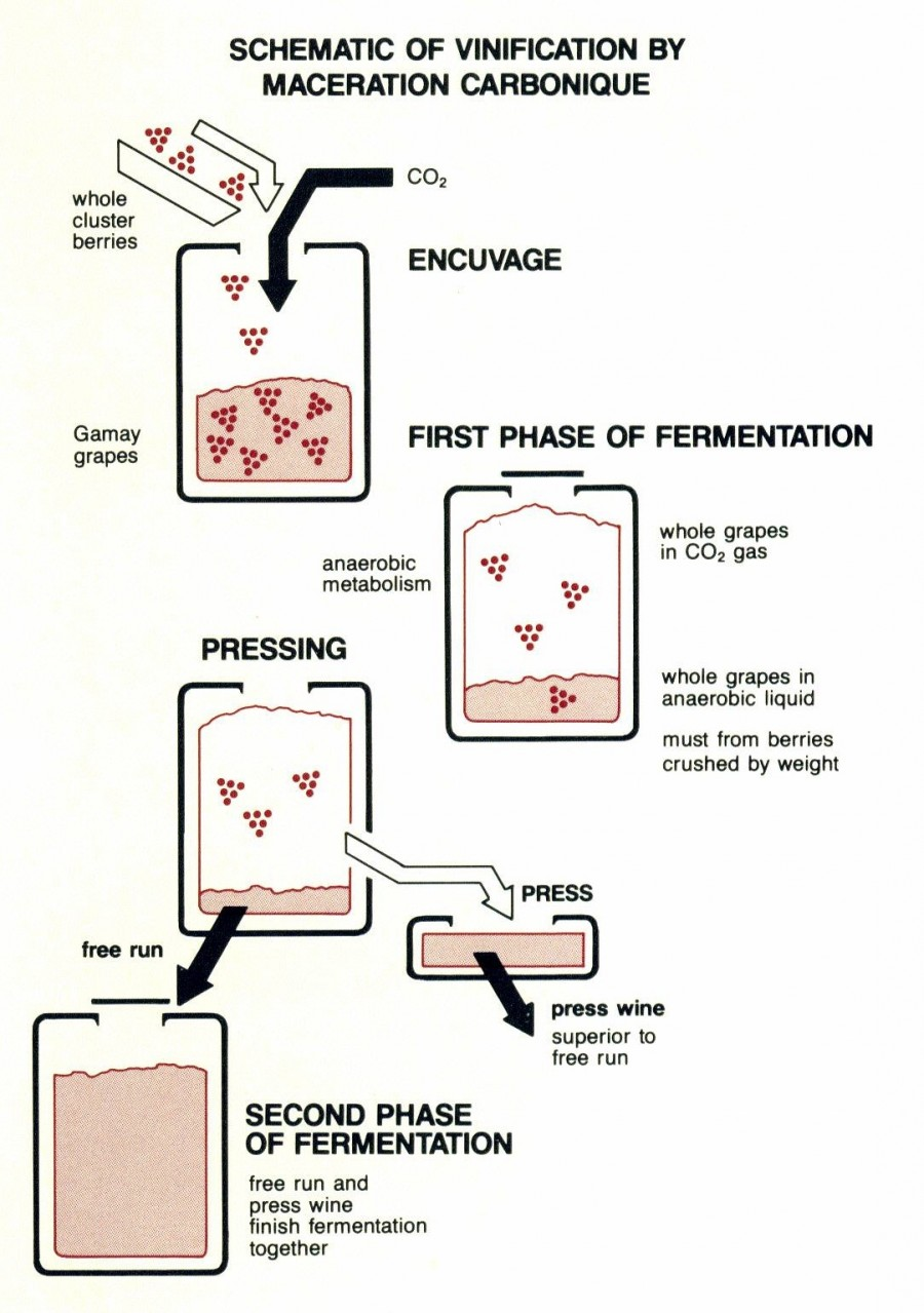 techniques of maceration