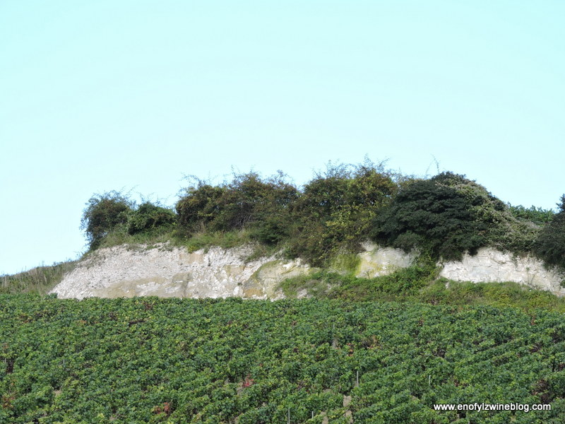 On outcropping that shows the chalky soils typical in Champagne