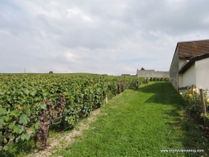 Clos Saint Hilaire - A small, one hectare plot located on the  Billecart property in Mareuil-sur-Ay