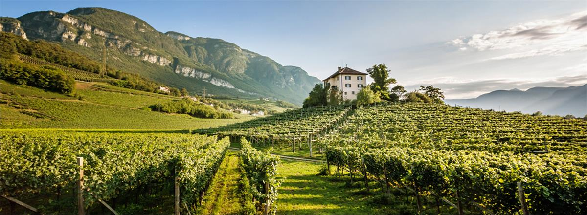 Image courtesy of AltoAdigeWines.com