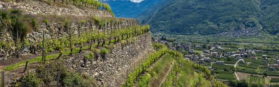 Valtellina vineyard
